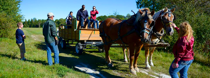 Photo of Hay and Sleigh Rides 1