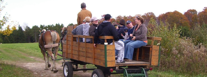 Photo of Hay and Sleigh Rides 10