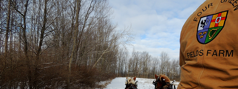 Photo of Hay and Sleigh Rides 11