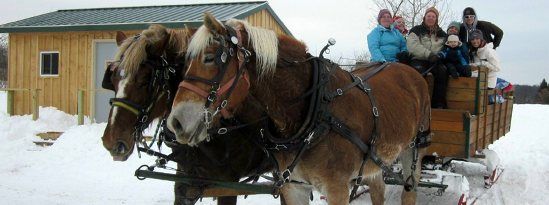 Photo of Hay and Sleigh Rides 12