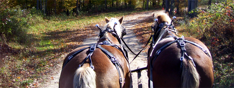 Photo of Hay and Sleigh Rides 17