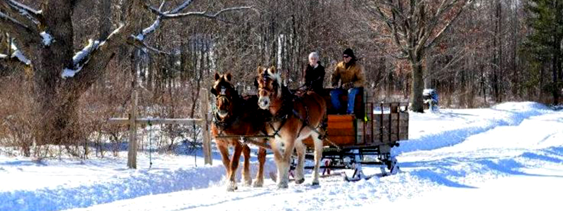 Photo of Hay and Sleigh Rides 7