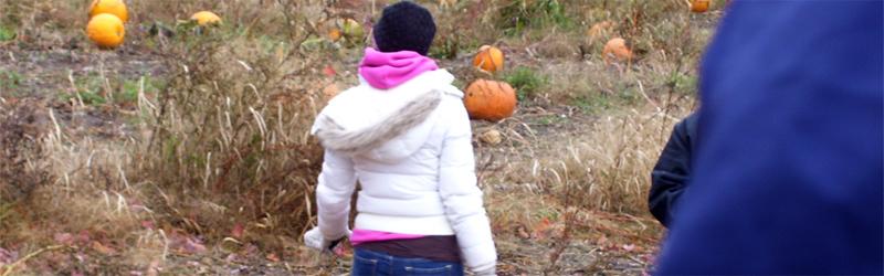 Pumpkin Patch 9
