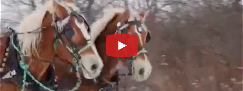 Hay & Sleigh Rides YouTube Video